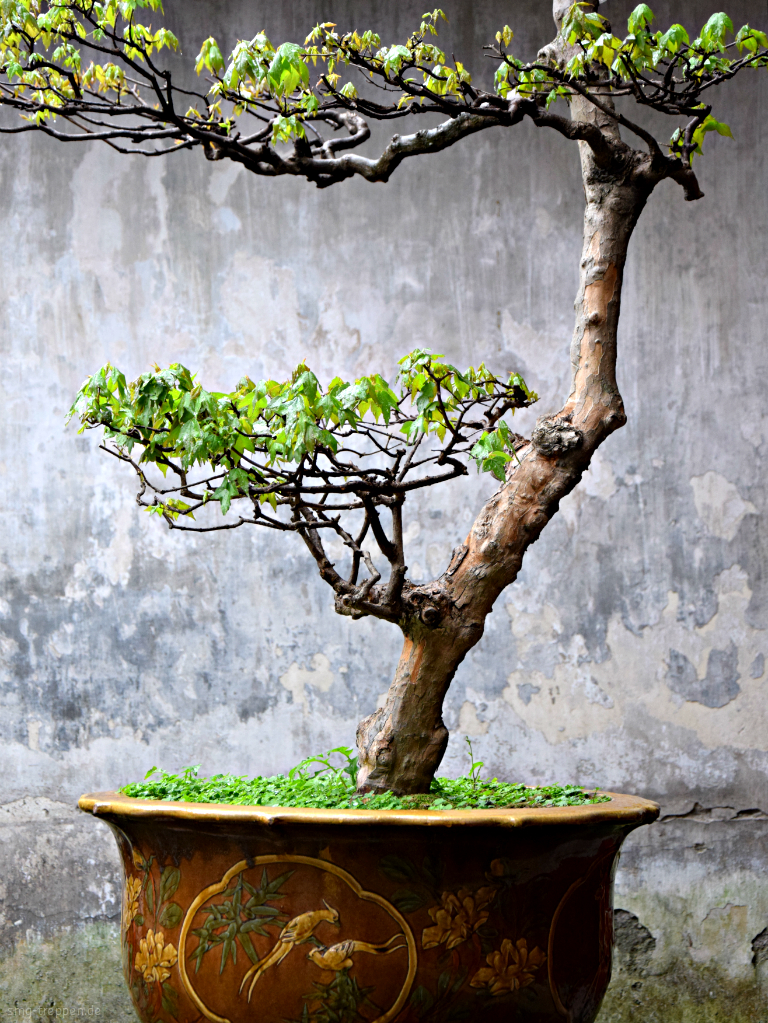 smg treppen zu klein f r treppenstufen bonsai im yu garten. Black Bedroom Furniture Sets. Home Design Ideas