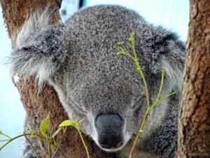 Auge in Auge mit Australiens wilder Tierwelt