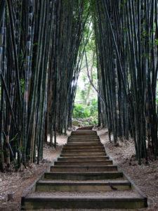 Bambus-Treppe